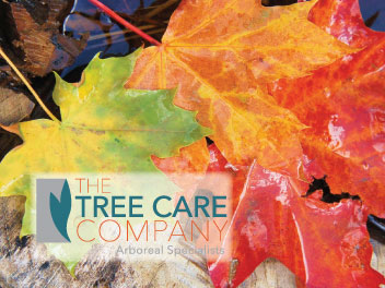 Tree Care Company